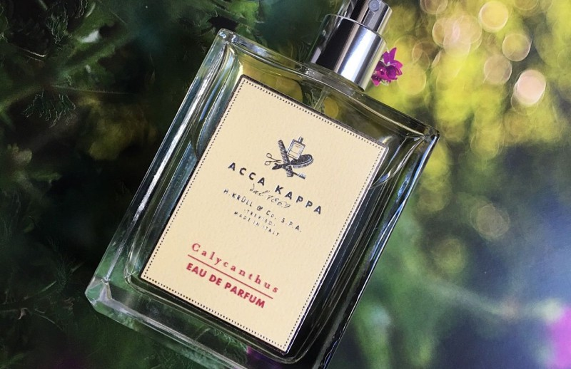 Calycanthus by Acca Kappa Review 1